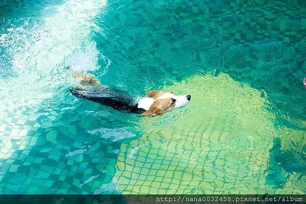 彰化寵物游泳池 鹿和訓犬學校 (22).jpg