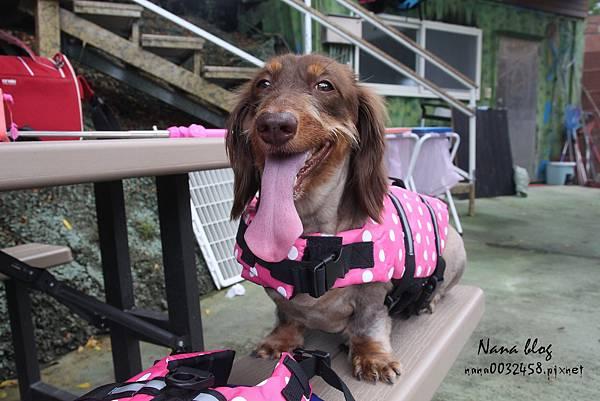 台南寵物游泳池 森 • 呼吸 Jorona Park  (25).jpg