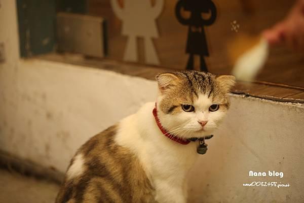 台中寵物友善餐廳-R星咖啡 (55).JPG
