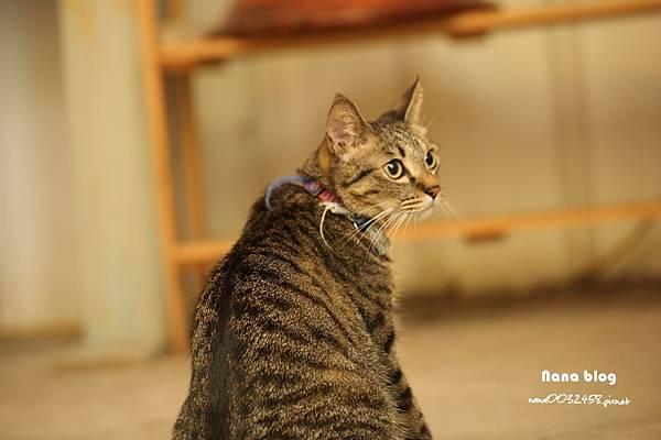 台中寵物友善餐廳-R星咖啡 (56).JPG