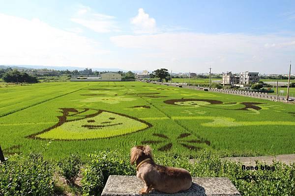 4花壇親子旅遊.JPG