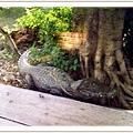 Guji Guji 鱷魚 ^^