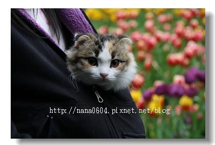 IMG_9896.jpg