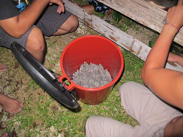 這一大桶滿滿上百隻海龜寶寶