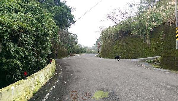 單車路線-南港找茶園 鹿窟事件紀念碑11.jpg