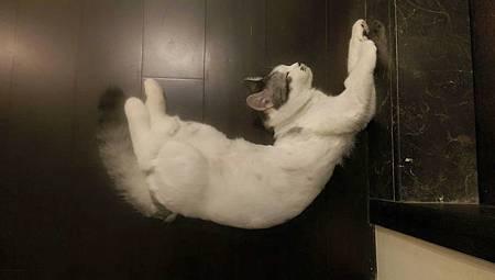 飛躍的貓咪 本人