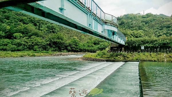 坪林五星級單車道金瓜寮吃香魚18.jpg