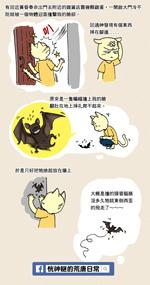 小2014-0811蝙蝠.jpg