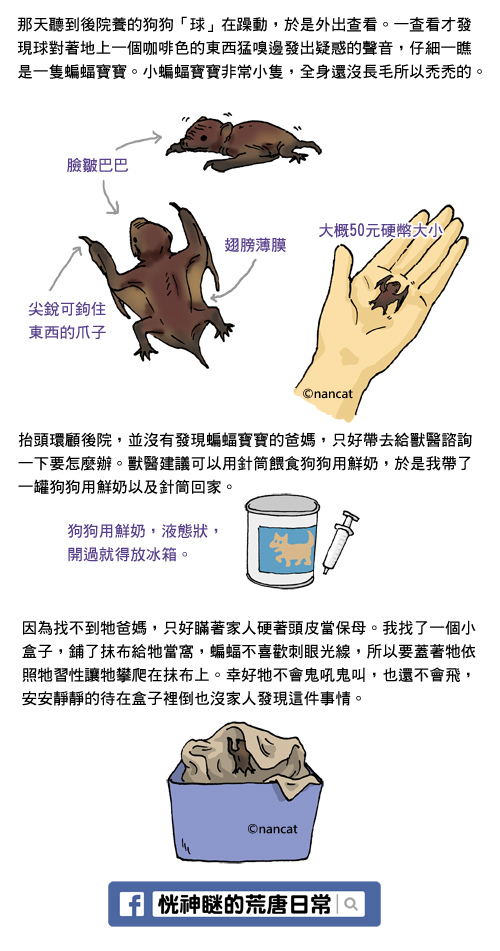 2014-0828蝙蝠no2-1.jpg