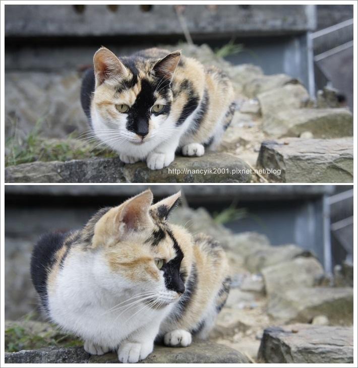 貓咪節6.jpg