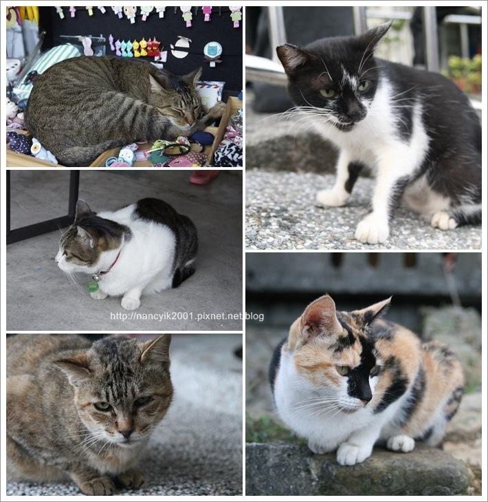 貓咪節7.jpg
