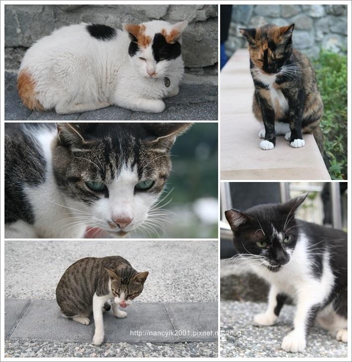 貓咪節8.jpg