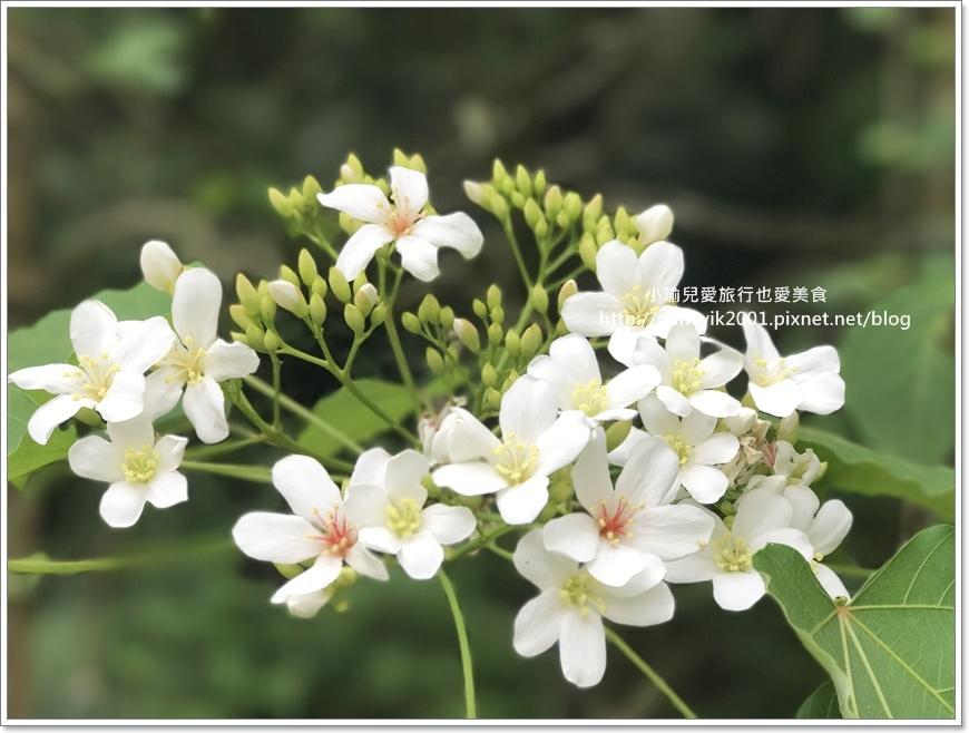 林口養生村0421