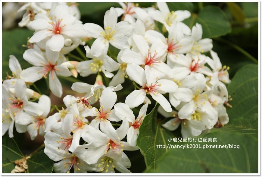 長庚養生文化村0428