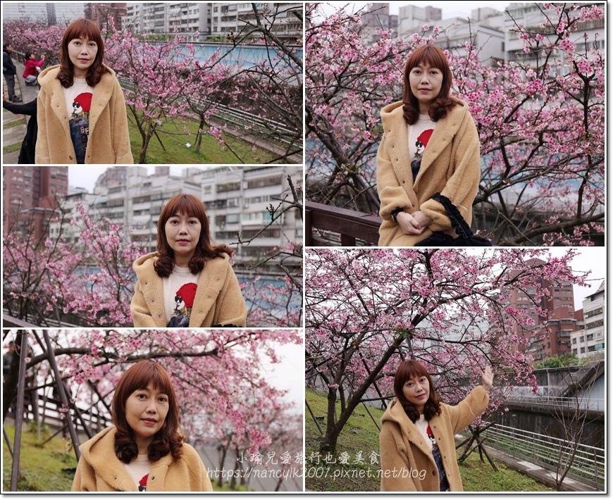 東湖櫻花1