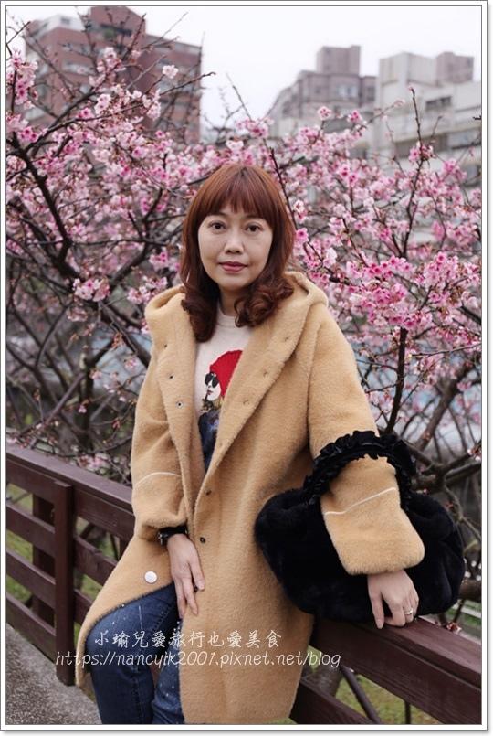 東湖櫻花2