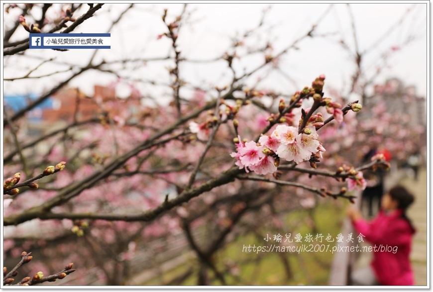 東湖櫻花9