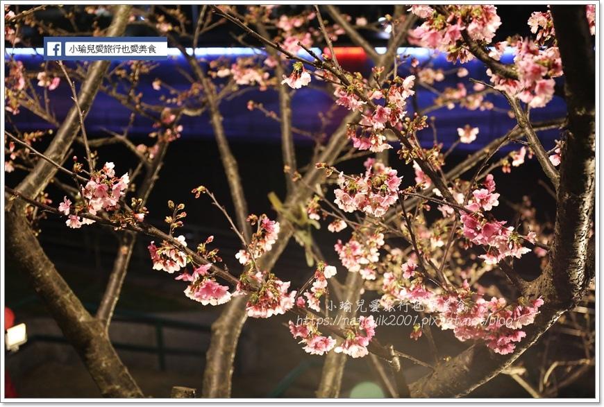 東湖櫻花24