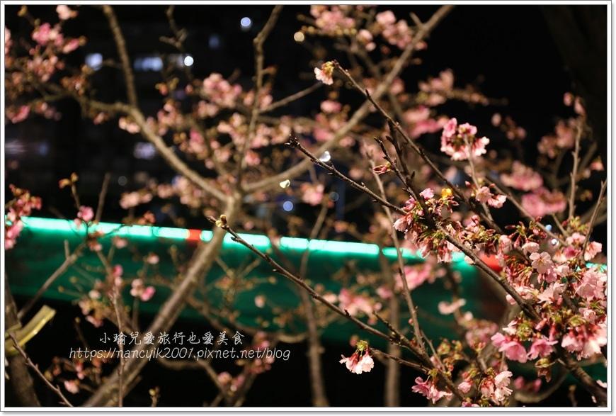 東湖櫻花25