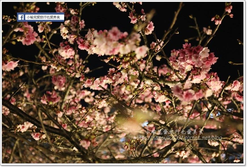 東湖櫻花26