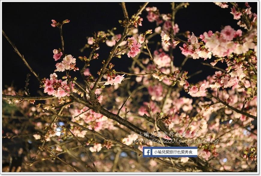 東湖櫻花28