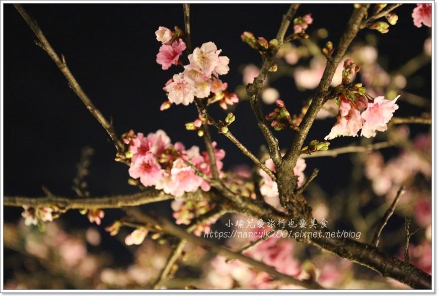 東湖櫻花29