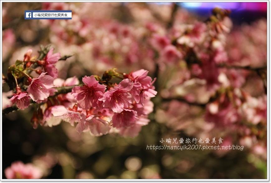 東湖櫻花34