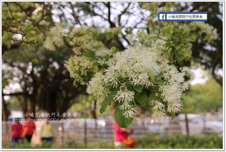 20190404大湖紀念公園