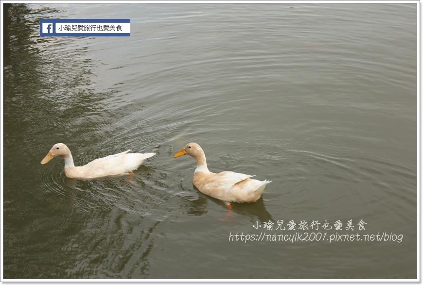 IMG_4600.JPG