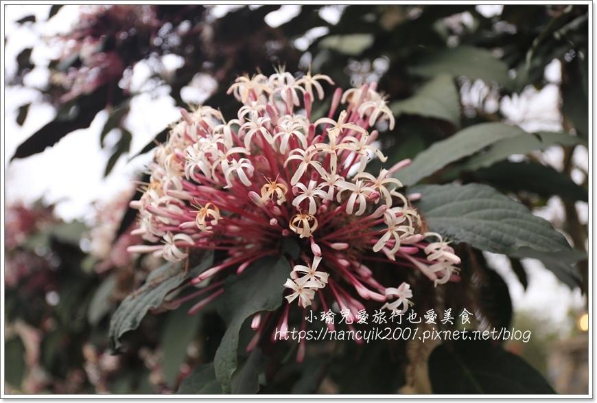 鷺鷥咖啡24.JPG