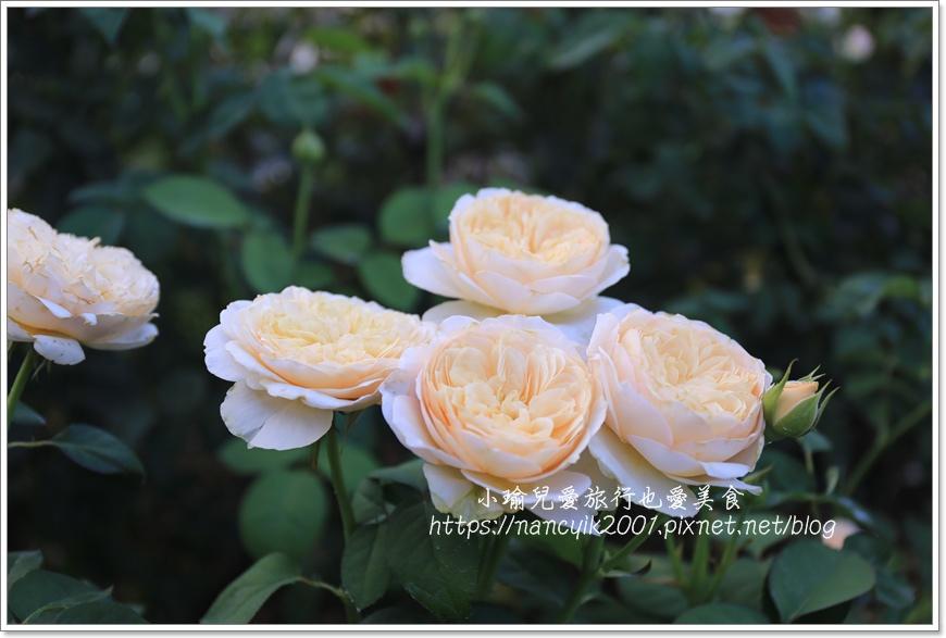 玫瑰山谷5.JPG