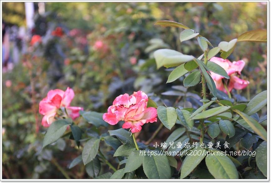 玫瑰山谷6.JPG