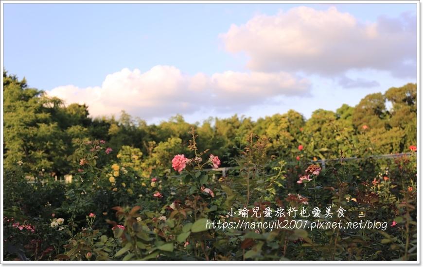 玫瑰山谷7.JPG