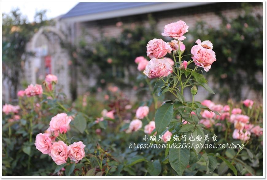 玫瑰山谷8.JPG