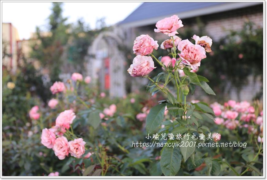 玫瑰山谷9.JPG