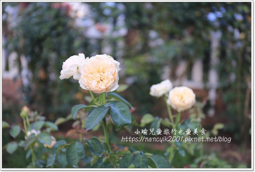 玫瑰山谷10.JPG