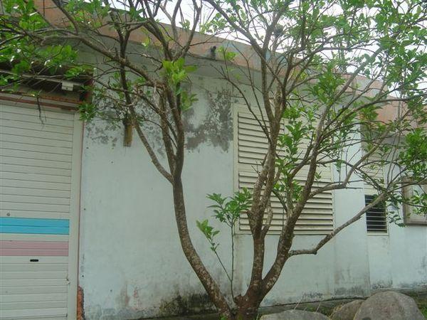 整理學校的相片 012.jpg