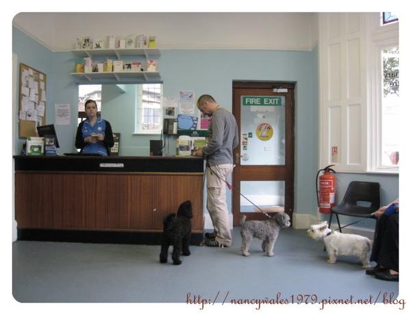 獸醫診所裡的櫃台