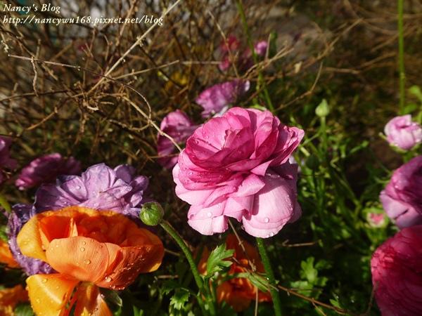 花卉試驗中心-3