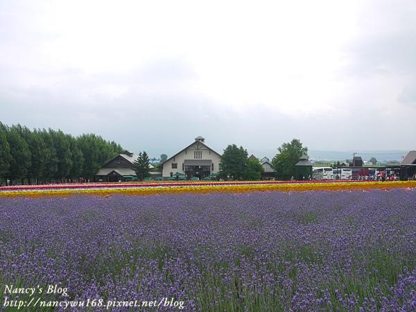 富田農場-5.JPG