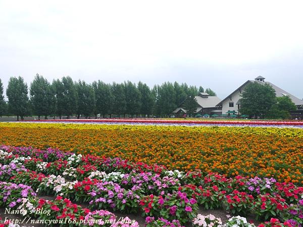 富田農場-7.JPG