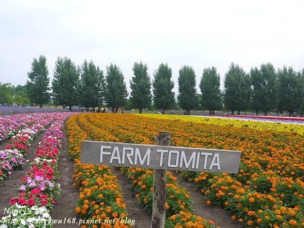 富田農場-8.JPG