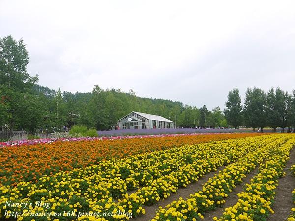 富田農場-11.JPG