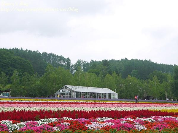富田農場-12.JPG