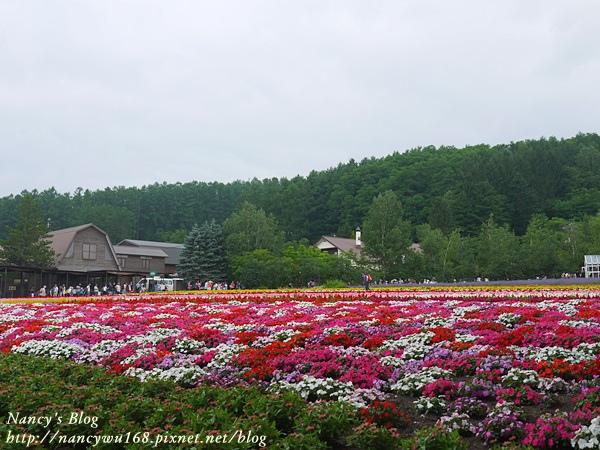 富田農場-14.JPG