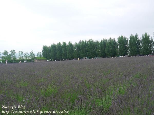 富田農場-16.JPG