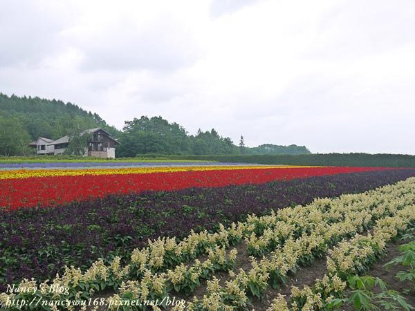 富田農場-17.JPG