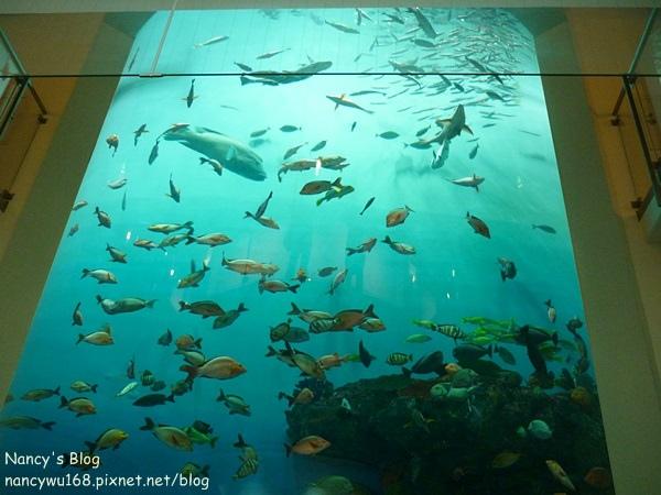 尼克斯海洋公園-3.JPG