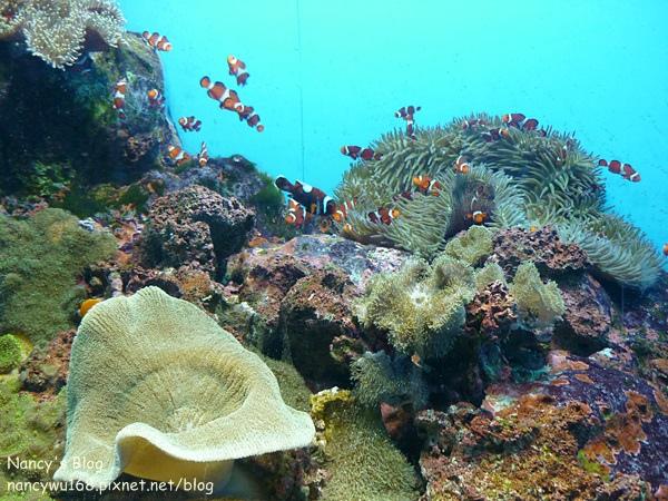 尼克斯海洋公園-13.JPG