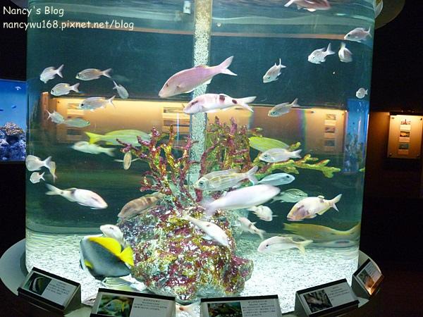 尼克斯海洋公園-14.JPG